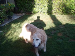 Wotan A Desert Guide Dog returning to work
